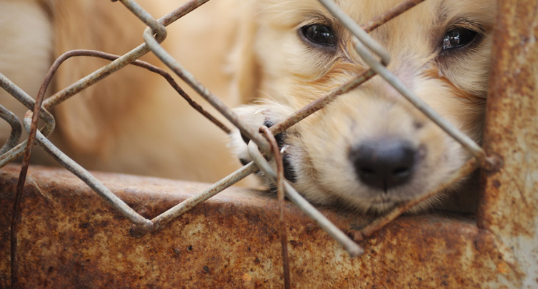 753x405_puppy-cage