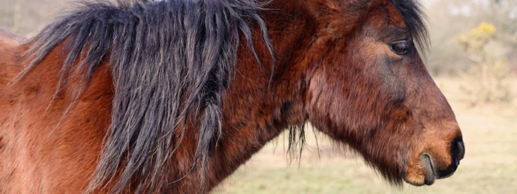 1060x398_horse-02