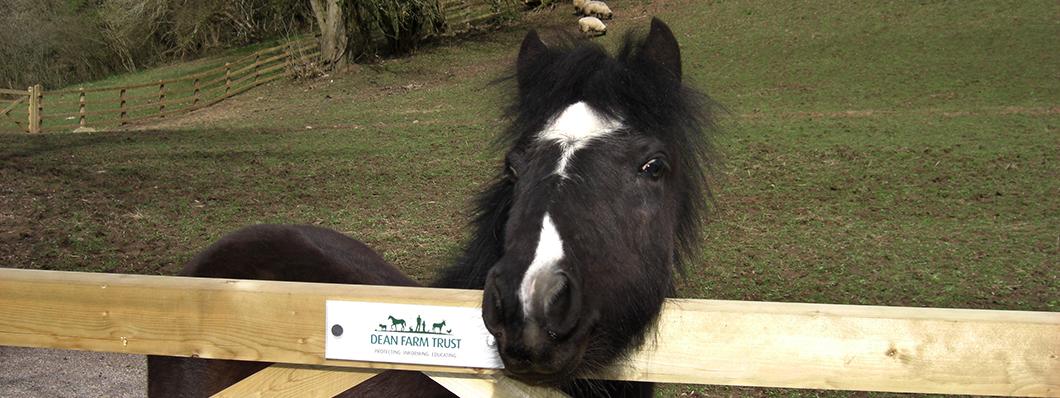 1060x398_horse