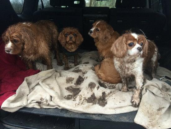 My friends and I love muddy walks