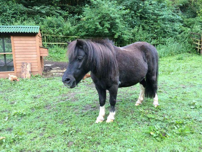 brambles-horse-photo