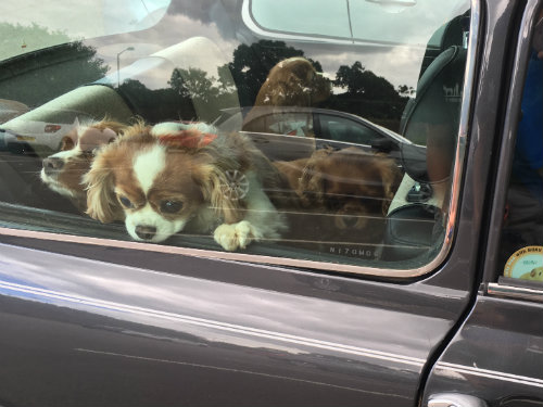 Peeking out of the car window