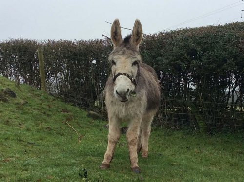 pedro-donkey-photo