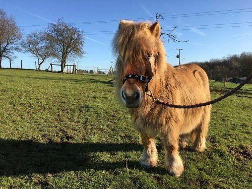 solo-horse-photo