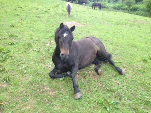 sooty-horse-photo
