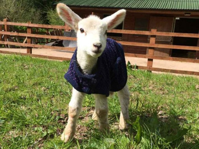 Dean Farm Trust: Alan