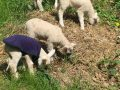 Dean Farm Trust: Alan & friends