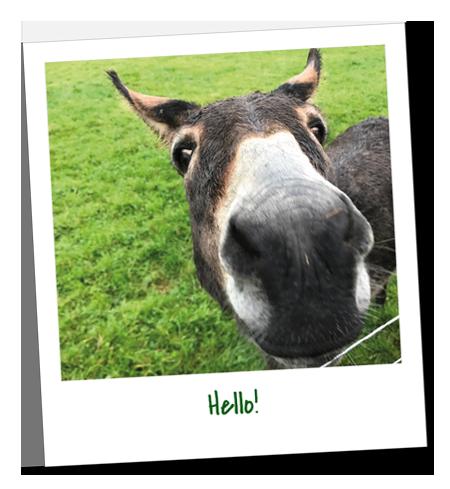 Dean Farm Trust – Hello!