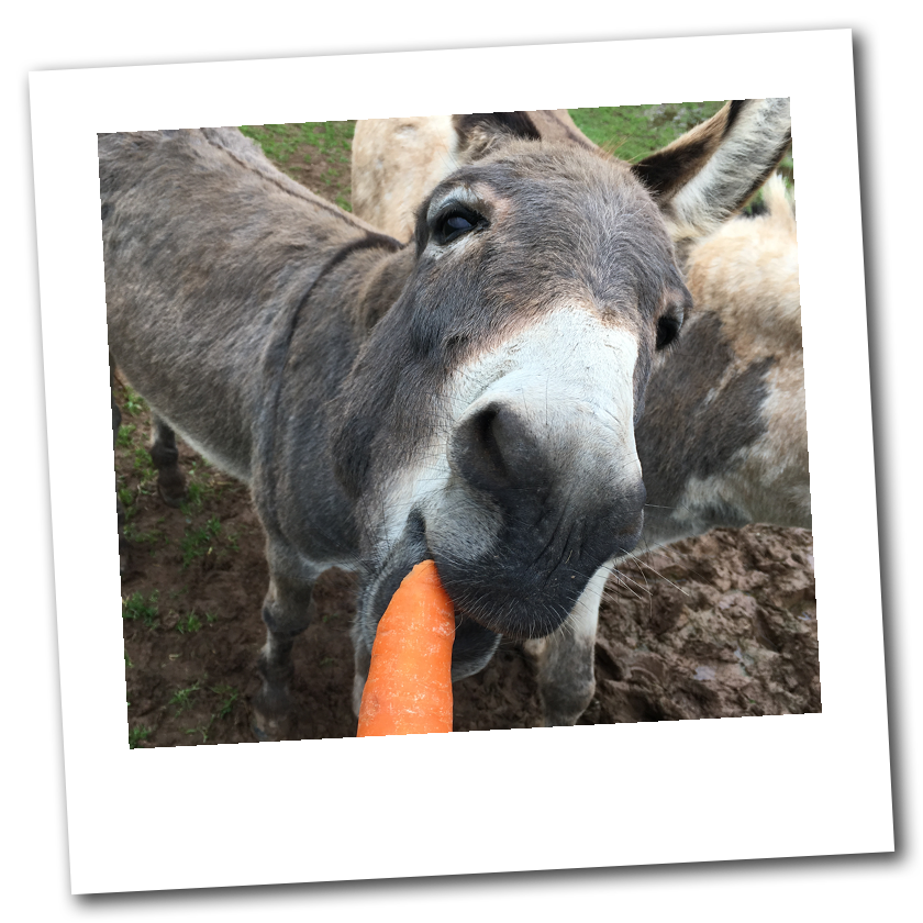 Dean Farm Trust: Archie