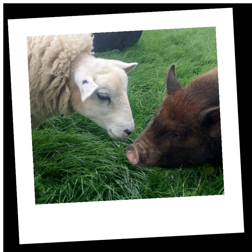 Dean Farm Trust: Amy & Roy