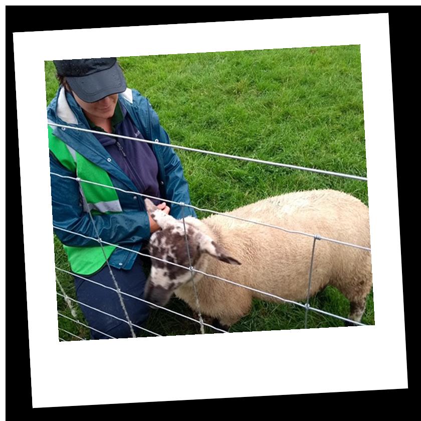 Dean Farm Trust: Volunteer