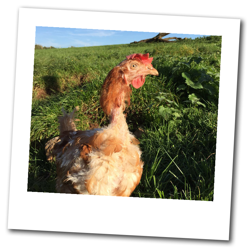 Dean Farm Trust: Phyllis